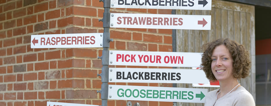 Pick Your Own Fruits at Little Mountains Farm in Great Totham